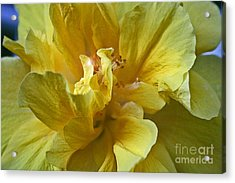 Acrylic Print featuring the photograph Yellow Is Yellow by Alison Caltrider