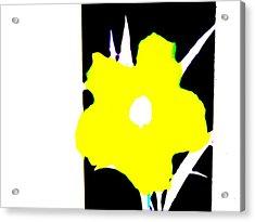 Yellow Jack Acrylic Print