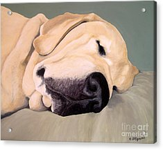 Yellow Lab - A Head Pillow Is Nice Acrylic Print