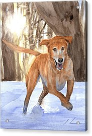 Yellow Lab Dog In Snow Watercolor Portrait Acrylic Print by Mike Theuer