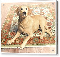 Yellow Lab On A Rug Watercolor Portrait Acrylic Print by Mike Theuer