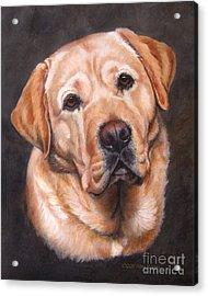 Yellow Labrador Portrait - Dark Yellow Dog Acrylic Print