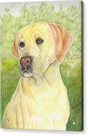 Yellow Labrador Retiever Acrylic Print