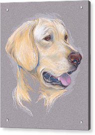 Yellow Labrador Retriever Portrait Acrylic Print
