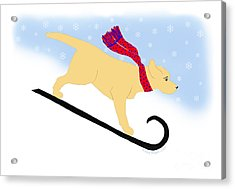 Yellow Labrador Snowboard Dog Acrylic Print