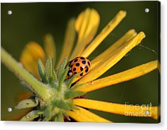 Acrylic Print featuring the photograph Yellow Lady - 2 by Kenny Glotfelty