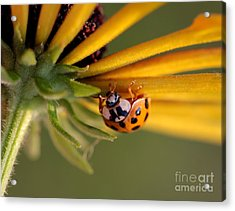 Acrylic Print featuring the photograph Yellow Lady - 3 by Kenny Glotfelty