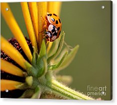 Acrylic Print featuring the photograph Yellow Lady - 4 by Kenny Glotfelty