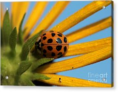 Acrylic Print featuring the photograph Yellow Lady Bug - 5 by Kenny Glotfelty