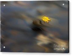 Yellow Leaf Floating In Water Acrylic Print by Dan Friend