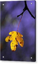 Yellow Leaf Acrylic Print