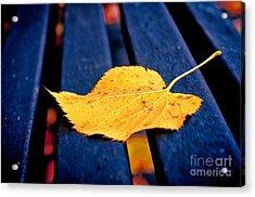 Yellow Leaf On Bench II Acrylic Print by Silvia Ganora