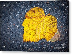 Yellow Leaf On Ground Acrylic Print by Silvia Ganora