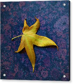 Yellow Leaf On Marble Acrylic Print by David Davies