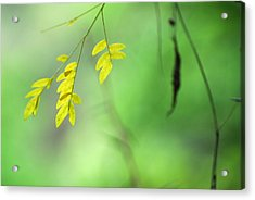 Yellow Leaves Acrylic Print by Guido Montanes Castillo