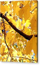 Yellow Leaves Acrylic Print by Valentino Visentini
