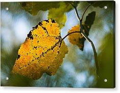 Yellow Light - Featured 3 Acrylic Print by Alexander Senin