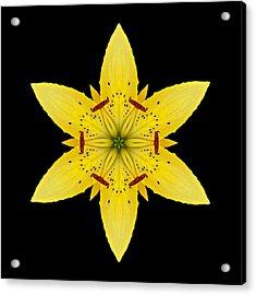 Yellow Lily I Flower Mandala Acrylic Print