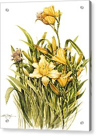 Acrylic Print featuring the painting Yellow Lily by Bob  George