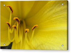 Acrylic Print featuring the photograph Yellow Lily Detail by Mary Bedy