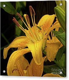 Acrylic Print featuring the photograph Yellow Lily With Bug by Michael Flood