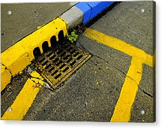 Yellow Lines And Sewer Grate On Street Acrylic Print