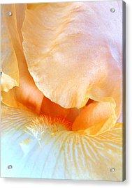 Yellow Macro Beard Acrylic Print by Mary Beth Landis