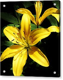 Yellow Magic Acrylic Print by Bruce Bley