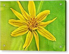 Yellow Mountain Bloom Acrylic Print