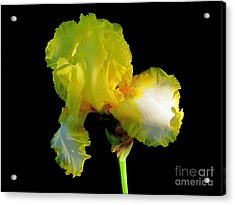 Yellow On Black Acrylic Print