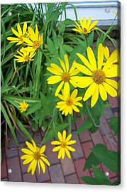 Yellow On Brick Road Acrylic Print