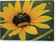 Acrylic Print featuring the photograph Yellow On Yellow by Alicia Knust