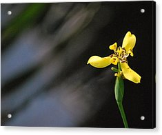 Acrylic Print featuring the photograph Yellow Orchid by Amee Cave