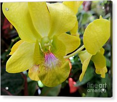 Acrylic Print featuring the photograph Yellow Orchid by Kristine Merc