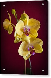 Yellow Orchid Acrylic Print