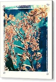 Yellow Orchids Acrylic Print by Deborah Gray Mitchell