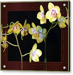 Yellow Orchids Acrylic Print by Mindy Newman