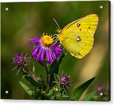 Yellow Over Purple Acrylic Print