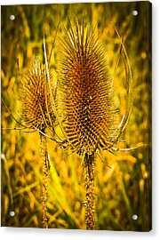 Yellow  Acrylic Print by Paulina Szajek