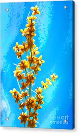 Acrylic Print featuring the photograph Yellow Plant by Yew Kwang