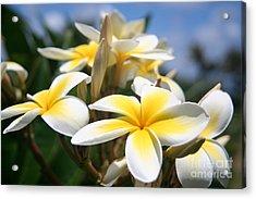 Yellow Plumeria Acrylic Print