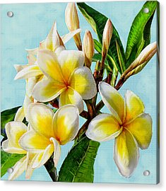 Yellow Plumeria Acrylic Print by Jane Schnetlage