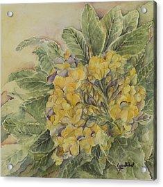 Yellow Primrose Acrylic Print by Lynne Bolwell