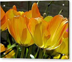 Yellow Acrylic Print by Ralph Jones