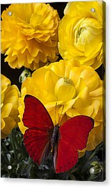Yellow Ranunculus And Red Butterfly Acrylic Print by Garry Gay