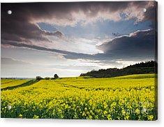 Yellow Rapeseed Field Beautiful Acrylic Print by Boon Mee