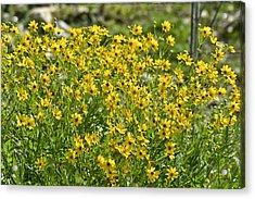 Yellow Rays Of Sunshine Acrylic Print by Teresa Dixon