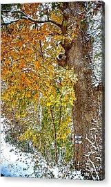 Yellow Ribbon Of Leaves Acrylic Print