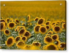 Acrylic Print featuring the photograph Yellow by Ronda Kimbrow