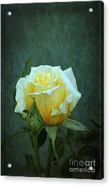 Acrylic Print featuring the photograph Yellow Rose 2014 by Marjorie Imbeau